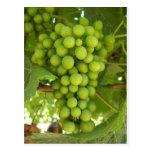 Grapes Postcard