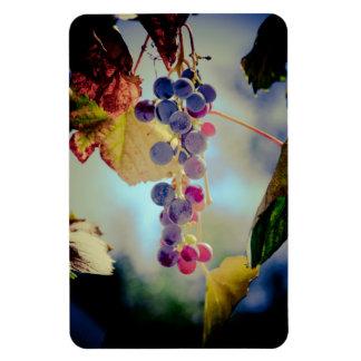 Grapes Rectangular Photo Magnet