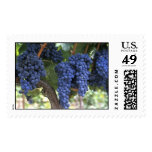 Grapes Ready for Harvest Postage