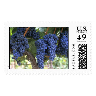 Grapes Ready for Harvest Postage Stamps