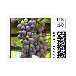 Grapes Stamps