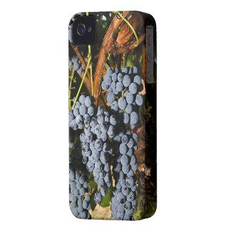 Grapes Vineyard 2 iPhone 4 Case