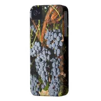 Grapes Vineyard 2 iPhone 4 Case
