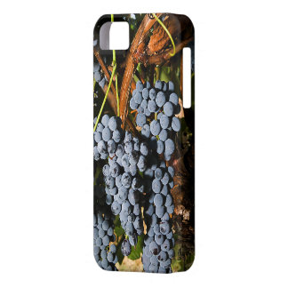 Grapes Vineyard 2 iPhone SE/5/5s Case