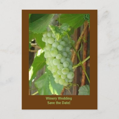Vintage Wedding Save  Dates on Grapes  Winery Wedding Save The Date  Post Cards