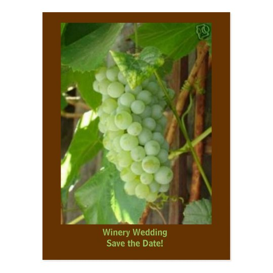 grapes, Winery Wedding Save the Date! Postcard