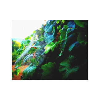 Grapevine at Sunrise Canvas Print