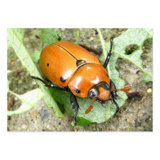 Grapevine Beetle ~  ATC Business Card Template