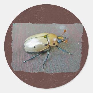 Grapevine Beetle (Pelidnota punctata) Series Classic Round Sticker