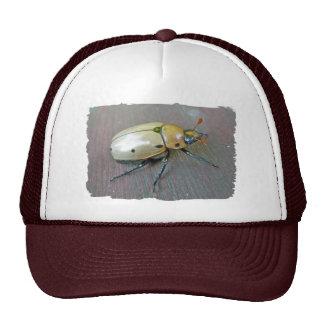 Grapevine Beetle (Pelidnota punctata) Series Trucker Hats
