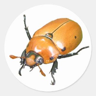 Grapevine Beetle ~ sticker