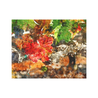 Grapevine in the Autumn Season Canvas Print