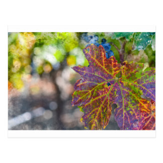 Grapevine in the Autumn Season Postcard