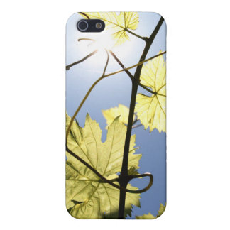 Grapevine iPhone 5 Covers