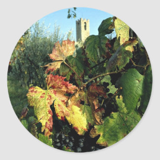 Grapevine, Tuscany, Italy Classic Round Sticker