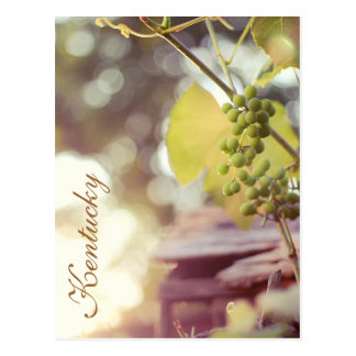 Grapevines and Birdhouses by JerseyFawn Post Card