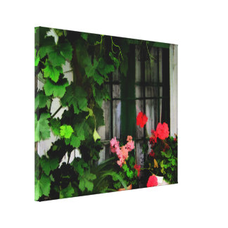Grapevines and Geraniums Around a Window Canvas Print