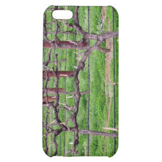 Grapevines at Winery, Adelaide, Australia Case For iPhone 5C