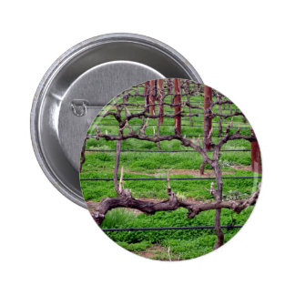 Grapevines at Winery Pinback Buttons