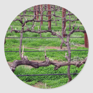 Grapevines at Winery Classic Round Sticker