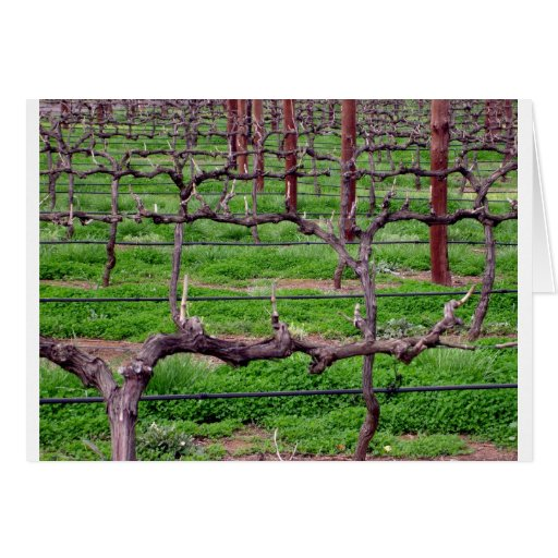 Grapevines at Winery Greeting Card