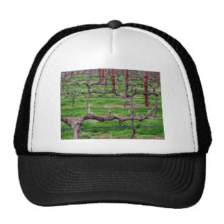 Grapevines at Winery Trucker Hat