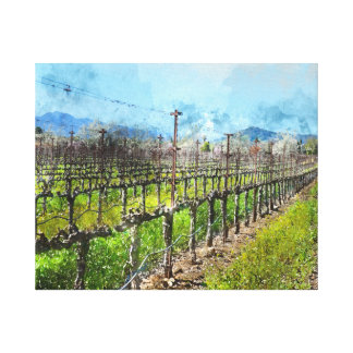 Grapevines in a Row in Napa Valley California Canvas Print