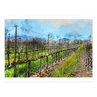 Grapevines in a Row in Napa Valley California Postcard