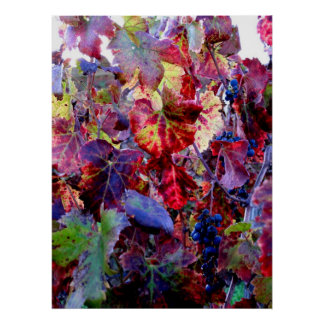 Grapevines in Fall  Poster