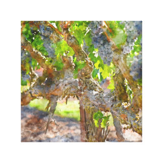 Grapevines in Napa Valley California Canvas Print