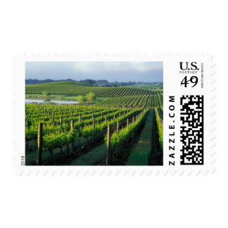 Grapevines in neat rows in California's Napa Stamp