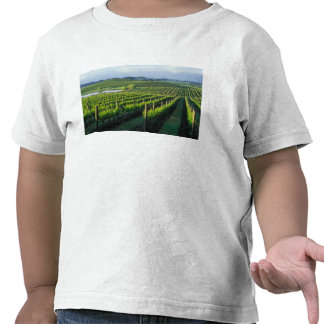 Grapevines in neat rows in California's Napa Tshirts