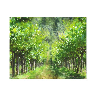 Grapevines in Spring in Napa Valley California Canvas Print