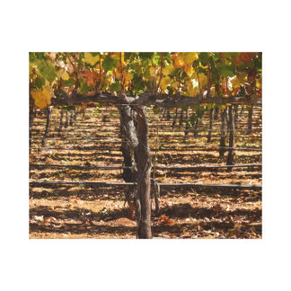 Grapevines in the Fall Canvas Print
