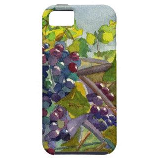 Grapevines iPhone SE/5/5s Case