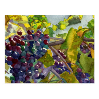 Grapevines Postcard