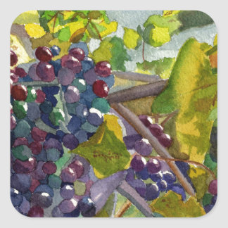 Grapevines Square Sticker