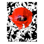 Graphic poppy post cards