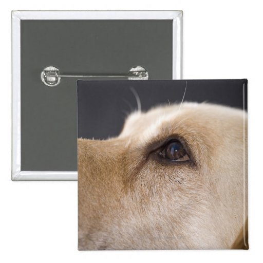 Graphic portrait of dog head, close-up button