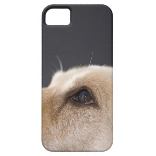 Graphic portrait of dog head, close-up iPhone 5 covers