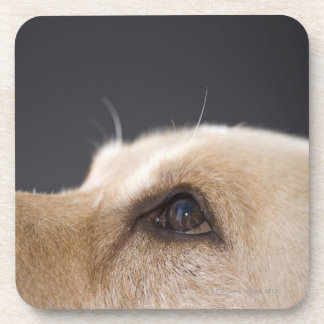Graphic portrait of dog head, close-up drink coasters