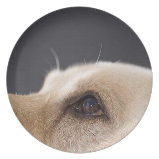 Graphic portrait of dog head, close-up melamine plate