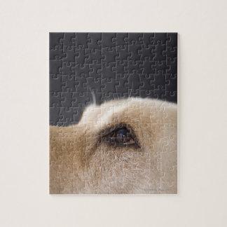 Graphic portrait of dog head, close-up puzzle
