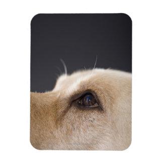 Graphic portrait of dog head, close-up rectangular photo magnet