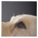 Graphic portrait of dog head, close-up large square tile