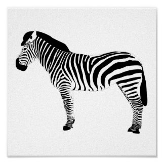 graphic zebra canvas poster