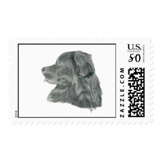 Graphite newf postage