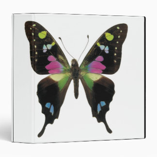 Graphium butterfly 3 ring binders