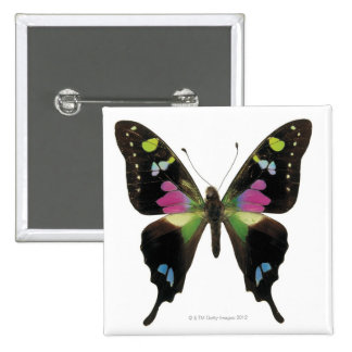 Graphium butterfly pin