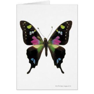 Graphium butterfly greeting card